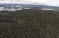 SPFの森林